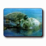 3D Lenticular Magnet - SEA OTTERS ASP-1014-MAL