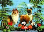 3D Lenticular POSTCARD - TWO DogS