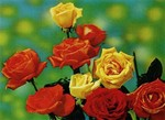 3D Lenticular POSTCARD - EIGHT ROSES