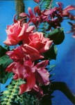 3D Lenticular POSTCARD - ROSES & ORCHIDS