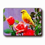 3D Lenticular Magnet - CANARY ROSES PK-327-MAL