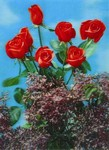 3D Lenticular POSTCARD - LILAC and Red ROSE
