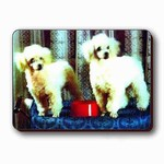 3D Lenticular Magnet - POODLES W/ Red DISH RC-623-MAL