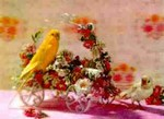 3D Lenticular POSTCARD - CANARY/CART W/Flowers
