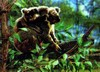 3D Lenticular POSTCARD - KOALA MOTHER & BABY