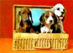 3D Lenticular THREE DogS IN BASKET