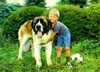 3D Lenticular ST.BERNHARD and BOY - POSTCARD