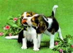 3D Lenticular POSTCARD - AFFECTIONATE DogS