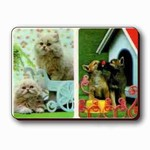3D Lenticular Dog and CatS Magnet VSP-014-MAL